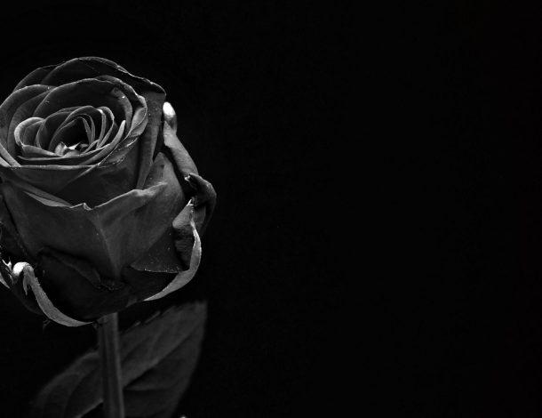 Zdjęcie przedstawia, różę na czarnym tle. Symbolizuje to żałobę.